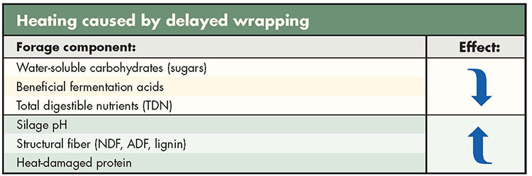 There's a downside to delayed wrapping | Hay and Forage Magazine