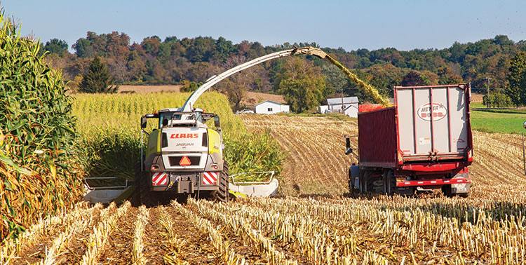 Corn silage harvest is a complex system