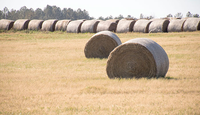 With Summer Rapidly Roaching It Is Important To Give Adequate Thought Proper Postbaling Storage Techniques Hay Losses Can Destroy Up 40
